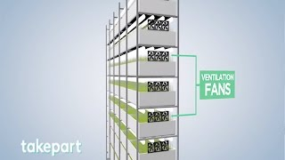 Vertical Farms | Design and Innovation | TakePart