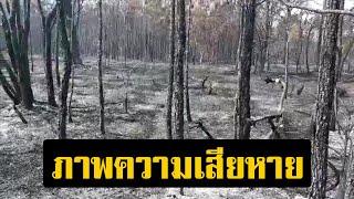 เปิดภาพความเสียหาย ไฟป่าภูกระดึง ขอกองทัพขนแทรกเตอร์ทำแนวกันไฟ