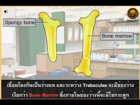 Gorhon สุขภาพไซบีเรียมีเส้นเลือดขอด