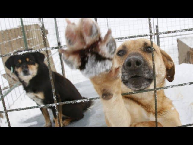 Бродячих собак некому ловить