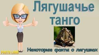 Лягушачье танго    PHOTO LAND (фото лягушки, лягушки и жабы, виды лягушек)