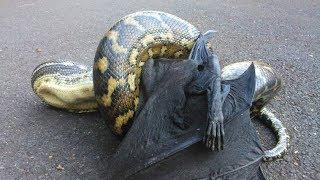 Это Домашние Змеи, братан. Купил змею и пожалел. Змея напала на человека