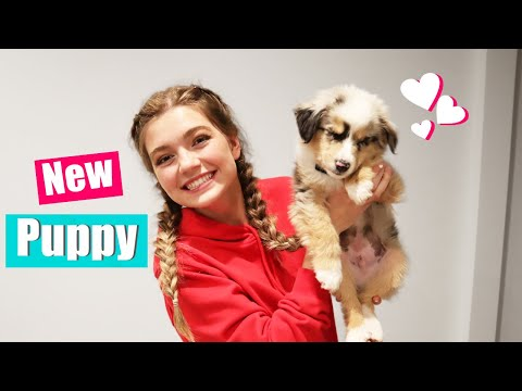 Bringing Home My New Puppy! Puppy Reveal! music video cover