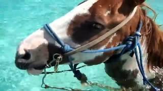Spirit of the west - Cayman Island