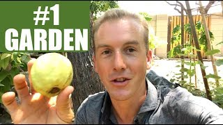 A Tour Of My Backyard & Front Yard Edible Garden | FOOD FOREST