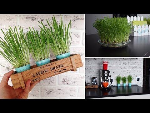 DIY ideas: Как посадить траву. Выращиваем газон