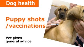 Puppy Vaccinations, injections & Shots - Vet Advice