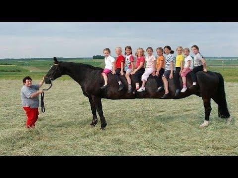 10 ऐसे घोड़े जिन्हें देखने के लिए नसीब लगता है || Top 10 Most Rare Horse Breeds In The World