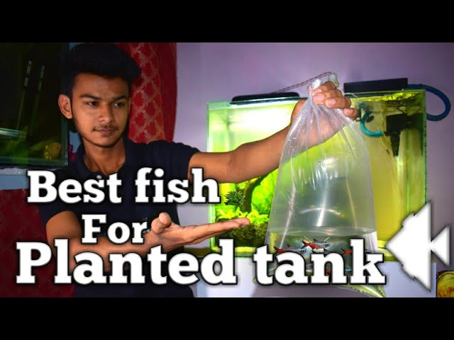 Best fish for planted tank