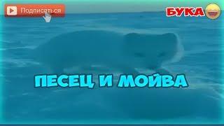 ПЕСЕЦ И МОЙВА I КОРПОРАЦИЯ БУКИ