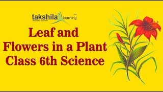 MORPHOLOGY OF FLOWERING PLANTS-VIDEOS-CH04-PART04-LEAF