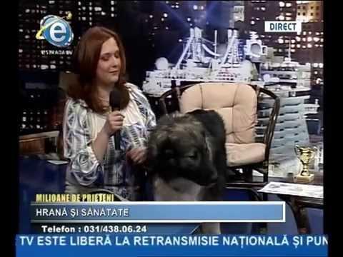"""Milioane de Prieteni Ep 4: """"Hrană și sănătate"""" - plus medalion Ciobănescul Carpatin/2015"""