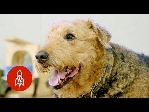 Zkoumání psího mozku