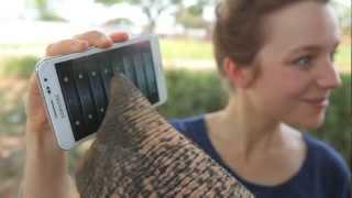 פיל משתמש בסמארטפון
