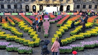 National Tulip Day in Amsterdam 2019