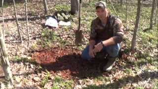 Mineral and Salt Licks for Whitetail Deer