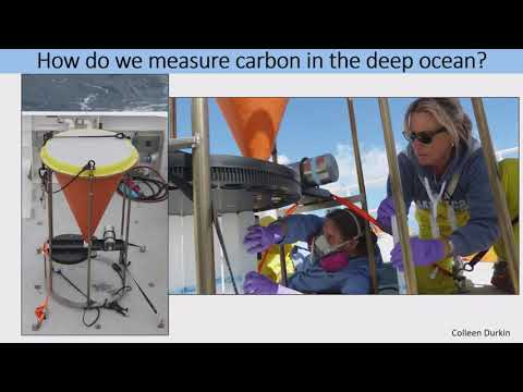 Cynthia Michaud Presents: Effects of phytoplankton composition & biominerals on abyssal carbon