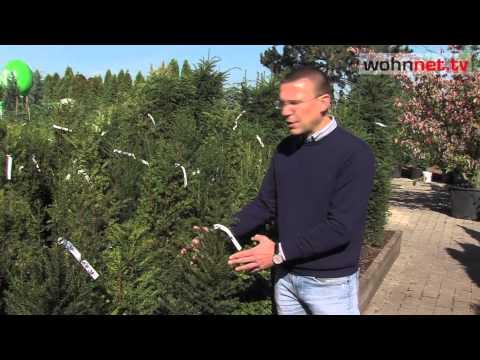 Alles über Heckenpflanzen - Tipps & Tricks!