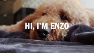 SickKids: PetSmart Paws for Hope Pet Therapy Dog Enzo goes to Camp