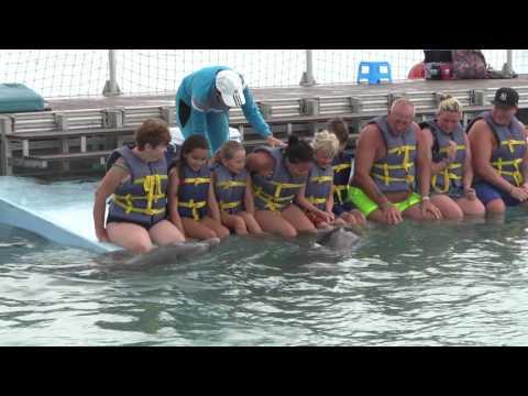 Dolphins Cayo Coco Cuba 2017