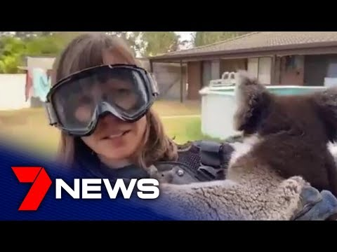 Scottish reporter handed drop bear