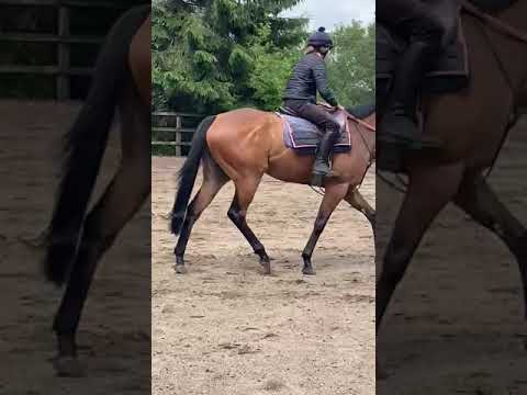 Liberty Breeze being ridden 6th July 2021. Back after her injury.