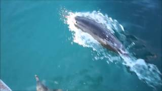 Прогулка на яхте с Дельфинами в Геленджике