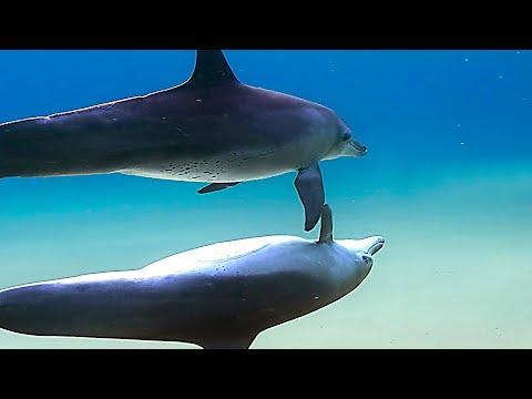 BLUE Bande Annonce ✩ Documentaire Disney sur les Dauphins (Famille, 2018)