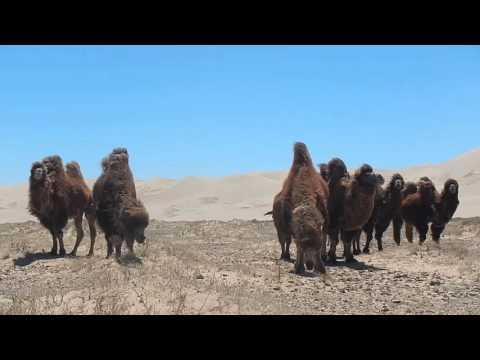 Backpacking Mongolia