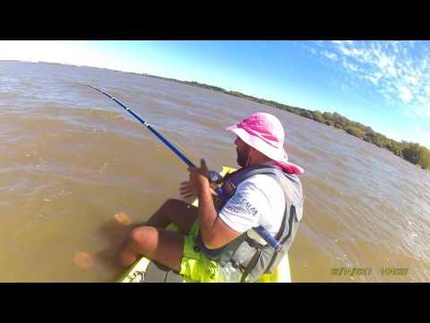 Pesca di un predatore su un tessitore