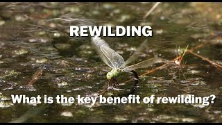 Thumbnail for Rewilding - What Are The Benefits?