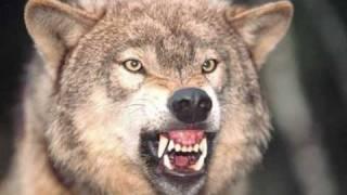 волчица-