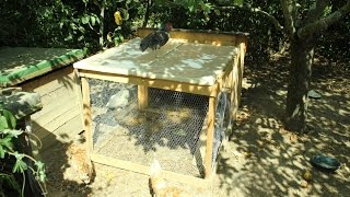 Pallet Wood Broody Coop With Run For Under $20. Bricolaje Gallinero. Brico Poulailler