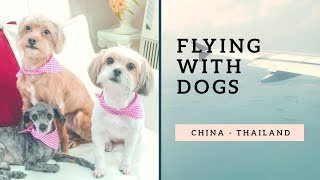 Flying with dogs (Taking dogs on a plane from China to Thailand)