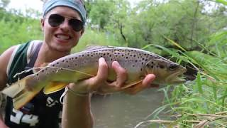 SUMMER FISHING WISCONSIN DRIFTLESS (Fly fishing wild brown trout)