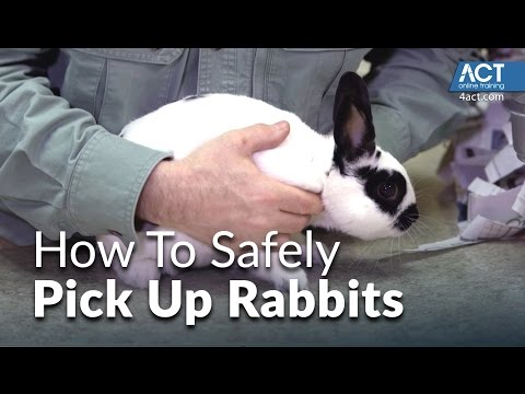 , title : 'How to pick up rabbits