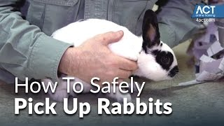 How to pick up rabbits