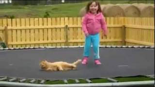 Смотреть онлайн Котик, спасайся от попрыгуньи!