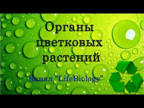 Лекарственные средства от простатита у мужчин