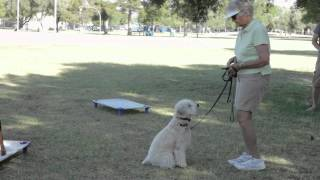 What Do They Teach Dogs on the First Day of Obedience School? : Dog Training & Care