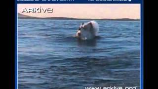 žralok.přirodopis.pulda