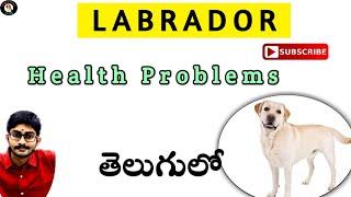 Labrador Health Problems In Telugu || By Dogs Channel Telugu ||
