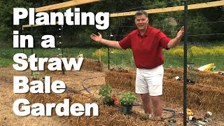 Planting in Your Straw Bale Garden