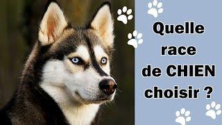 Test : Ma race de chien idéale ?