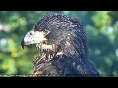 AEF DC Eagle Cam: 8-11-18: Remembering Valor