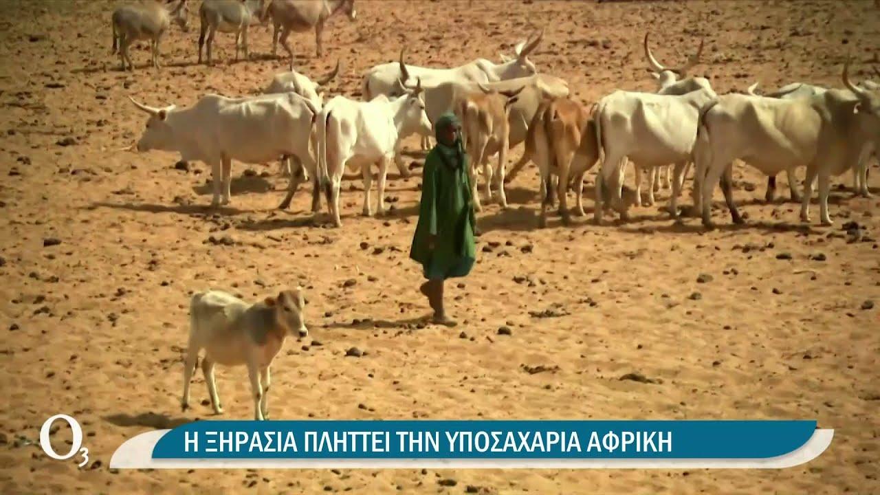 Δράσεις στο πλαίσιο της ημέρας κατά της ερημοποίησης και της ξηρασίας της γης | 17/06/2021 | ΕΡΤ