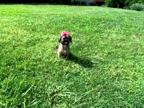 Maddy..Sweet Shiffon baby!!!