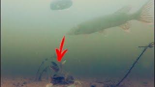 Смотреть онлайн Что будет, если погрузить стеклянную банку с рыбой в реку