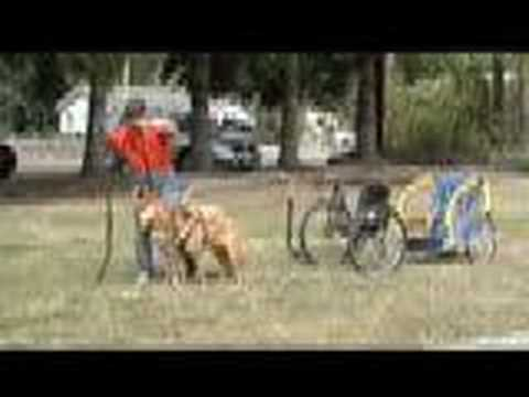 Bike Trailer Pulled By Dog Sulky