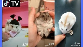 Tik Tok China | Super cute hamster